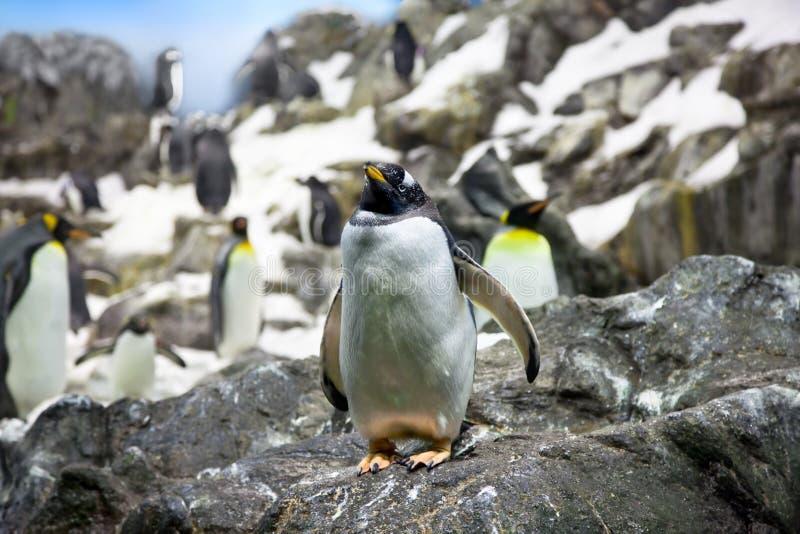 Overvolle kolonie van Pinguïnen op de steenkust stock foto