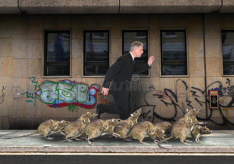 Overvolle Stad, Rattenras, Ratten