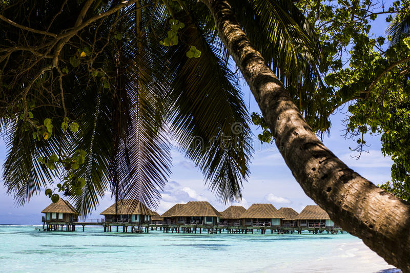 Download Overwater Villas With Palm Trees And A Beach In The Maldives Stock Image - Image of beautiful, beach: 75985837