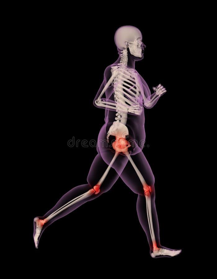 Overweight female medical skeleton running. 3D render of an overweight female skeleton running showing pressure points on joints stock illustration