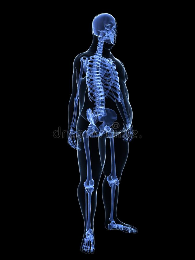 Overweight Male - Skeleton Royalty Free Stock Photos