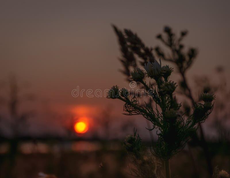 Overweldigend avondpanorama die van zon over het gebied plaatsen royalty-vrije stock afbeelding