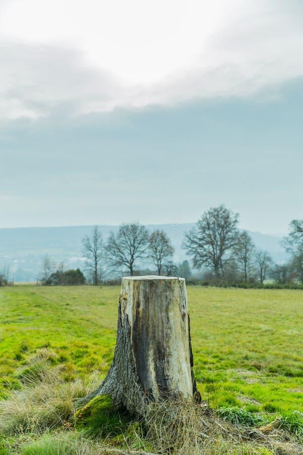 Overweldigend beeld van een boomstomp in een weide royalty-vrije stock afbeeldingen