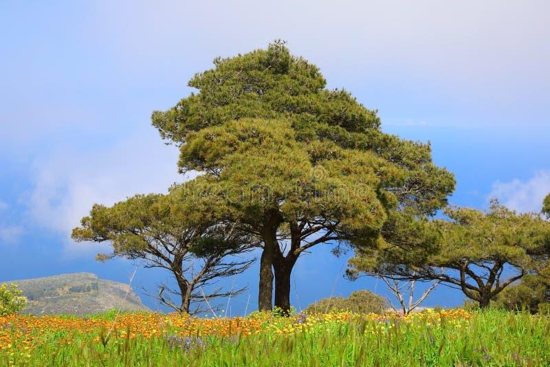 Overweldigend de lentelandschap van Siciliaanse aard stock foto's