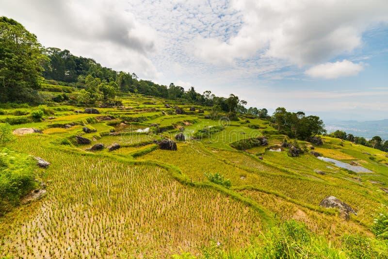 Overweldigend landschap van padievelden op de bergen van Batutumonga, Tana Toraja, Zuiden Sulawesi, Indonesië Panorama van abo stock fotografie