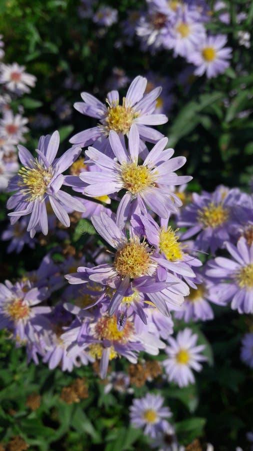 Overweldigende bloemen in de aard in purpere kleurenpartij van bloemen stock afbeelding