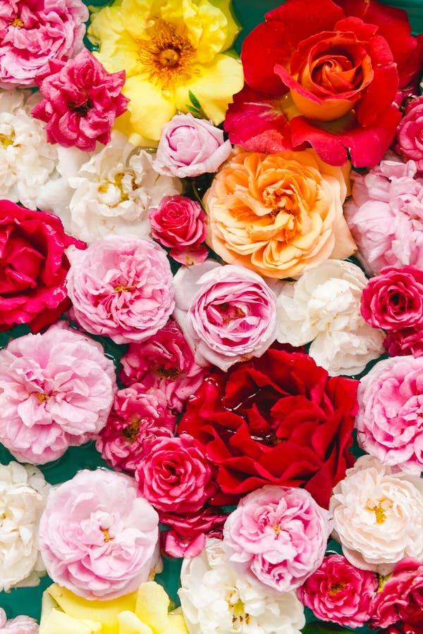 Overweldigende bloementextuur van kleurrijke rozen in water op blauwe achtergrond stock foto's