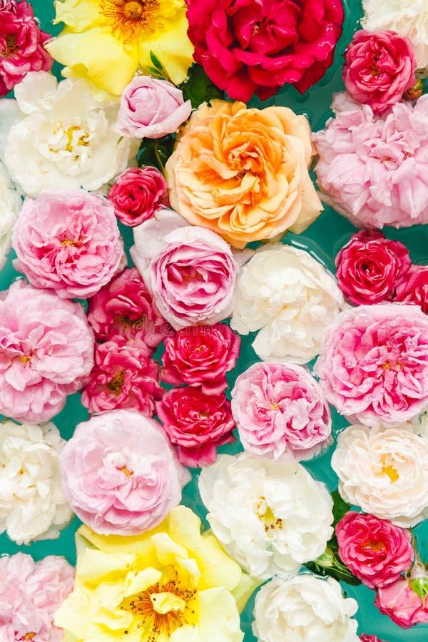 Overweldigende bloementextuur van kleurrijke rozen in water op blauwe achtergrond royalty-vrije stock afbeelding