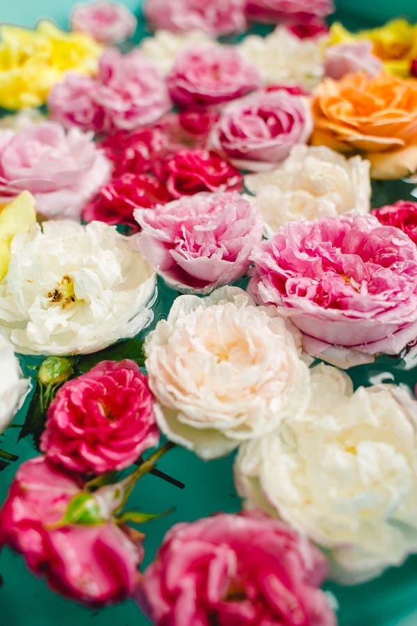 Overweldigende bloementextuur van kleurrijke rozen in water op blauwe achtergrond royalty-vrije stock afbeeldingen