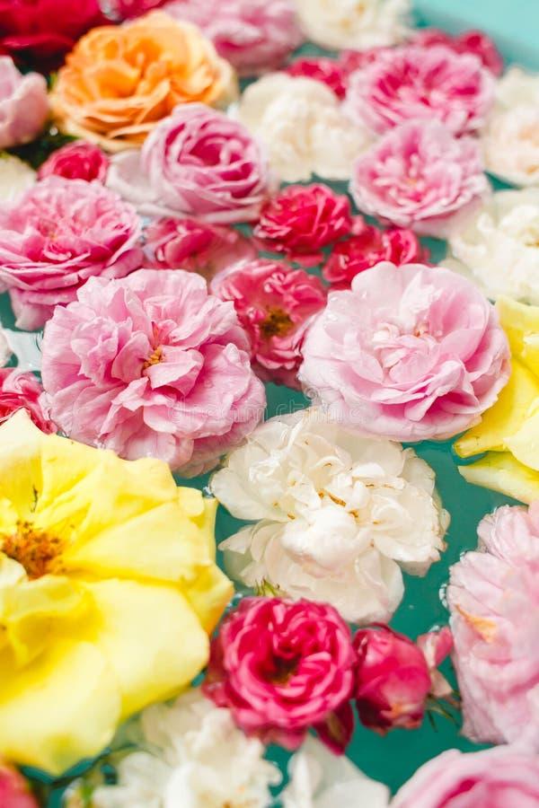 Overweldigende bloementextuur van kleurrijke rozen in water op blauwe achtergrond stock foto