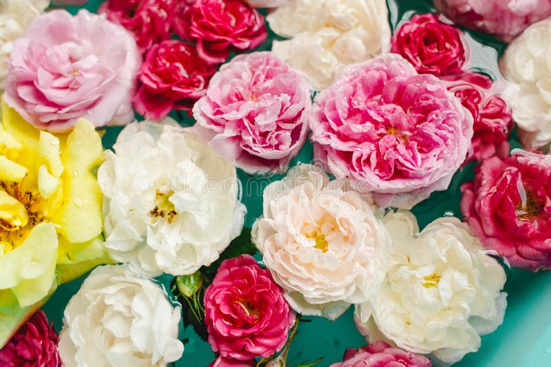 Overweldigende bloementextuur van kleurrijke rozen in water op blauwe achtergrond royalty-vrije stock foto
