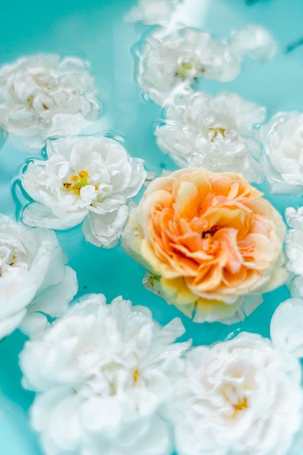Overweldigende bloementextuur van rozen in water op blauwe achtergrond royalty-vrije stock fotografie