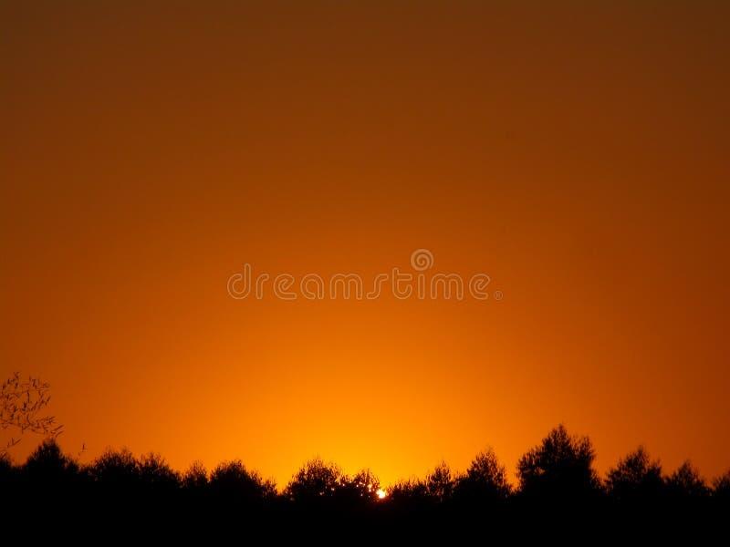 Overweldigende gouden gradatie van zonsonderganghemel over het silhouet van plattelandsbos stock afbeelding