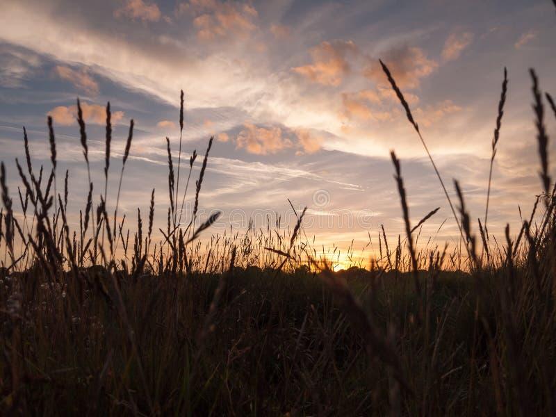 Overweldigende heldere de zon vastgestelde scène van de de herfstoogst over meerwater ref stock afbeelding