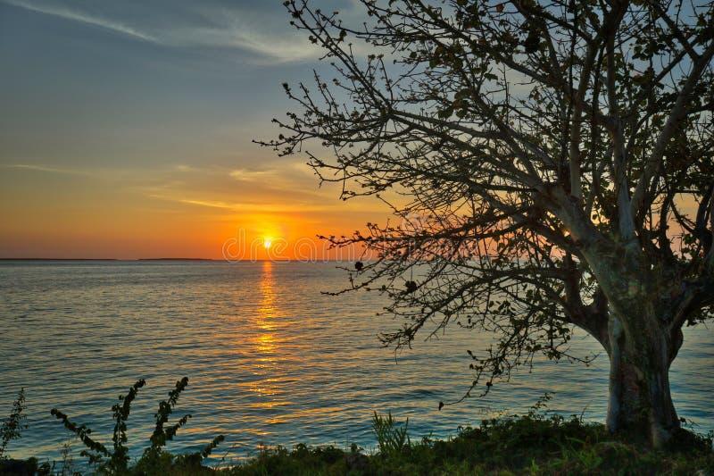 Overweldigende zonsondergang met boom in voorgrond royalty-vrije stock afbeeldingen