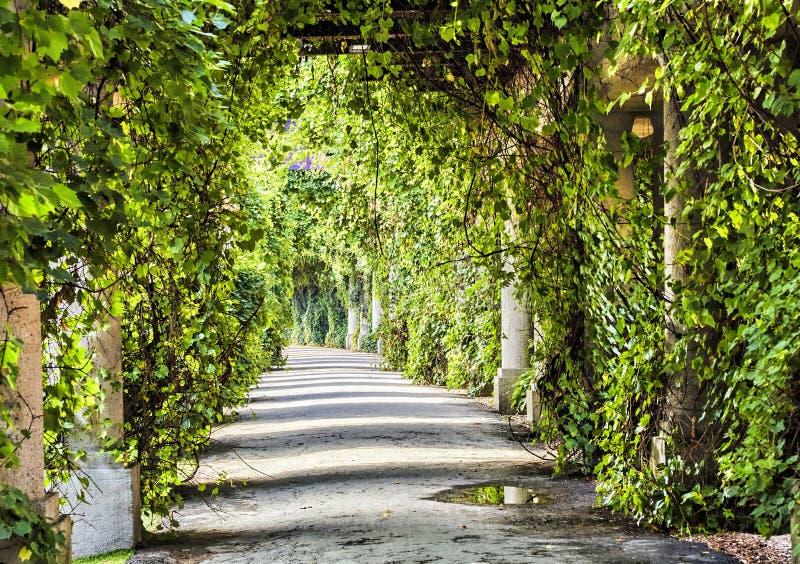 Overwelfde galerij in het park bij de zomer royalty-vrije stock foto