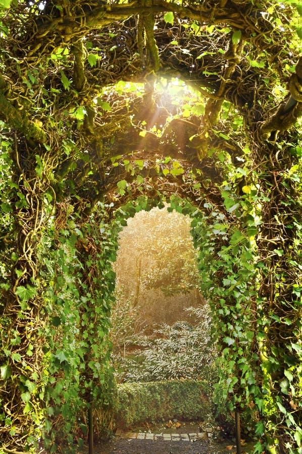 Overwelfde galerij van Ivy Trellis in Engelse Tuin stock afbeelding