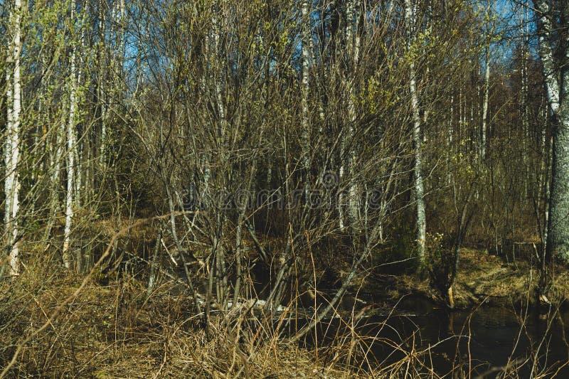 Overwoekerde bosbomen en installatiesaard royalty-vrije stock afbeelding