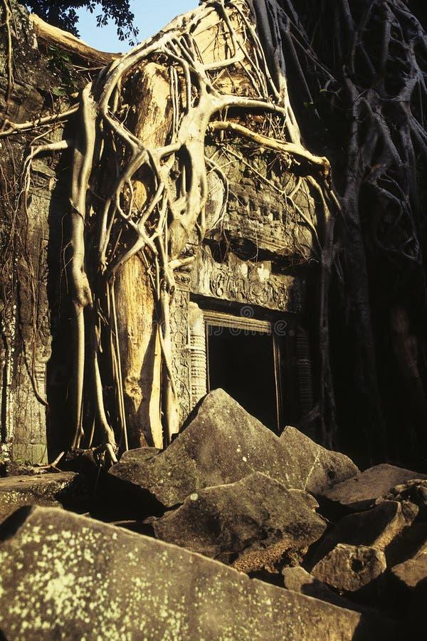 Overwoekerde ruïnes Kambodja royalty-vrije stock afbeeldingen