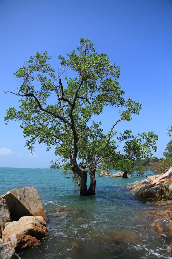 Overzees en boom stock afbeelding