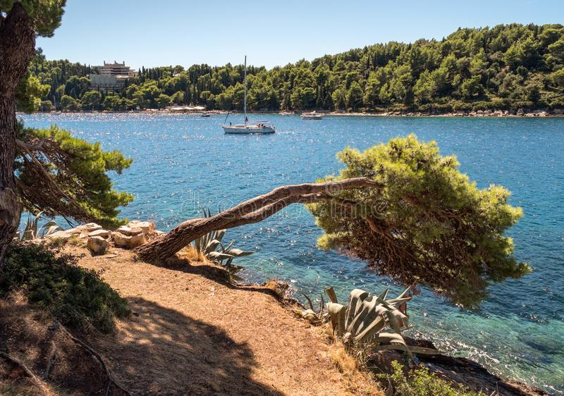 Overzees en boom Kroatisch landschap royalty-vrije stock foto's