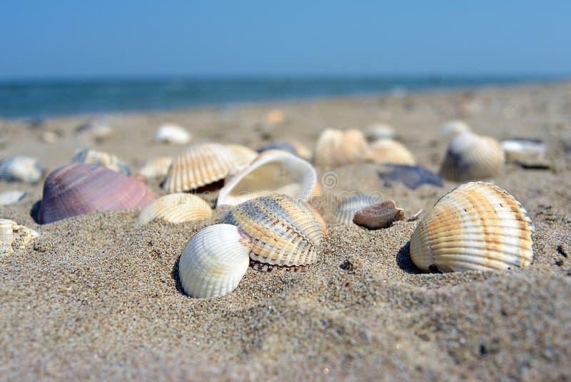Overzees en zeeschelpen Strand en kleurrijk zeeschelpenclose-up op de strandkust stock afbeelding
