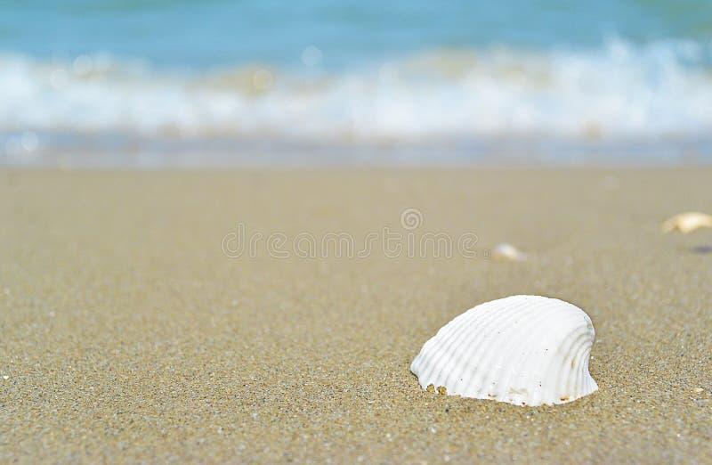 Overzees en zeeschelpen Strand en zeeschelpenclose-up op de strandkust stock afbeeldingen
