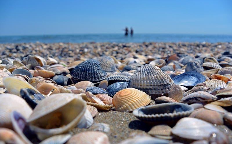 Overzees en zeeschelpen Strand en zeeschelpenclose-up op het strand Overzeese kust royalty-vrije stock afbeelding