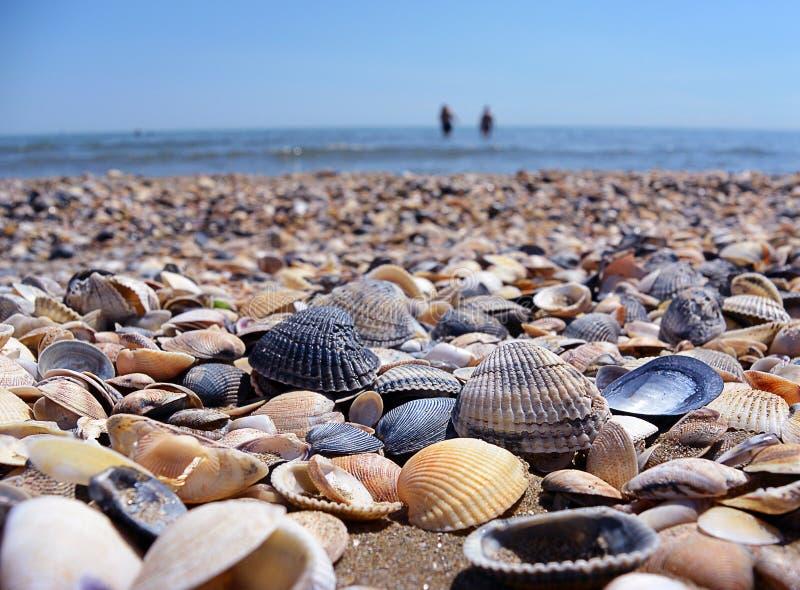 Overzees en zeeschelpen Strand en zeeschelpenclose-up op het strand Overzeese kust royalty-vrije stock foto