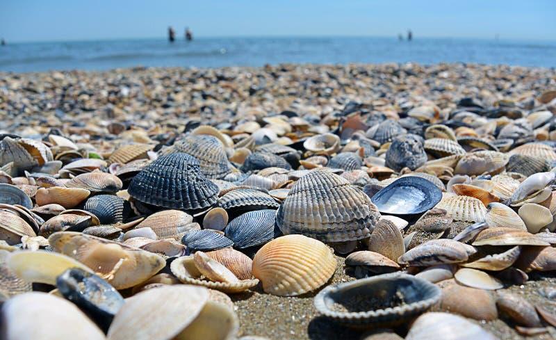 Overzees en zeeschelpen Strand en zeeschelpenclose-up op het strand Overzeese kust stock foto's