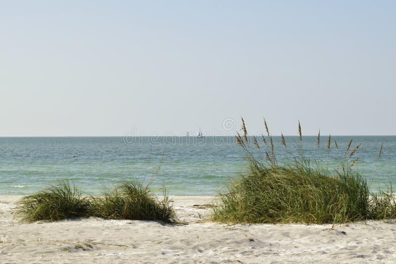 Overzees haver en gras op een zandduin stock foto's