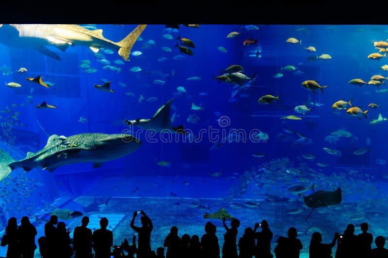 Overzees het levenspark in Okinawa stock fotografie