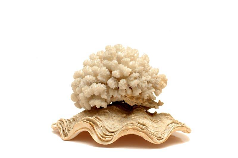 Overzees koraal royalty-vrije stock fotografie