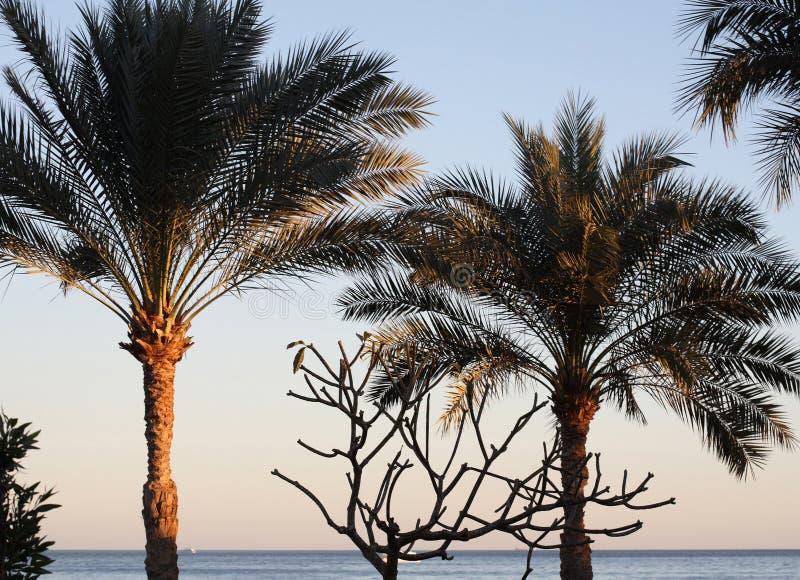 Overzees landschap, Egypte, palmen royalty-vrije stock fotografie