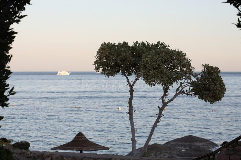Overzees landschap, Egypte, Sharm el-Sheikh stock afbeelding