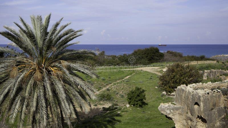 Overzees landschap met schip en palm stock foto