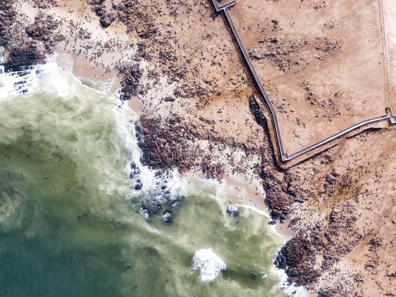Overzees Lion Colony in Namibië in Januari 2018 wordt genomen die stock afbeeldingen