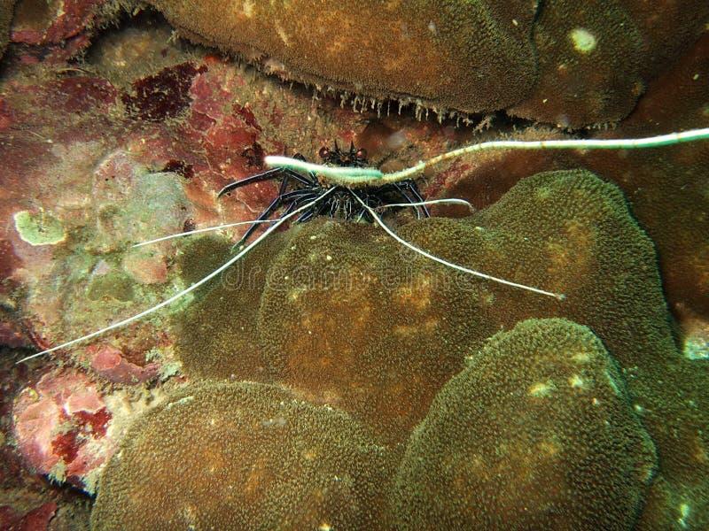 Overzees schepsel onderwater stock afbeelding