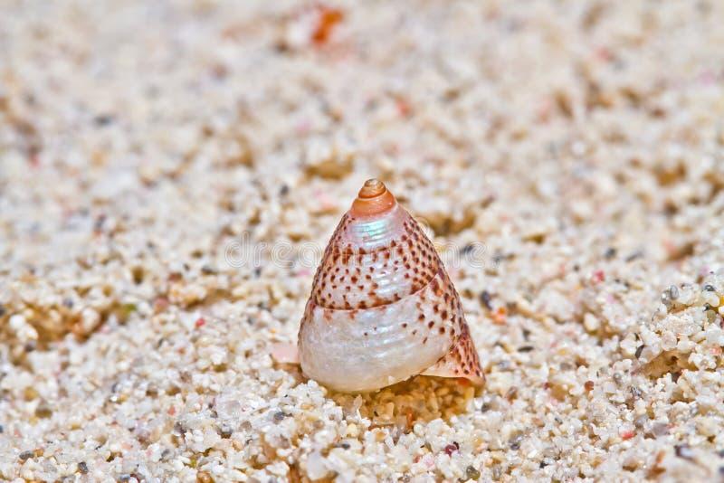 Overzees Shell 2 royalty-vrije stock afbeelding
