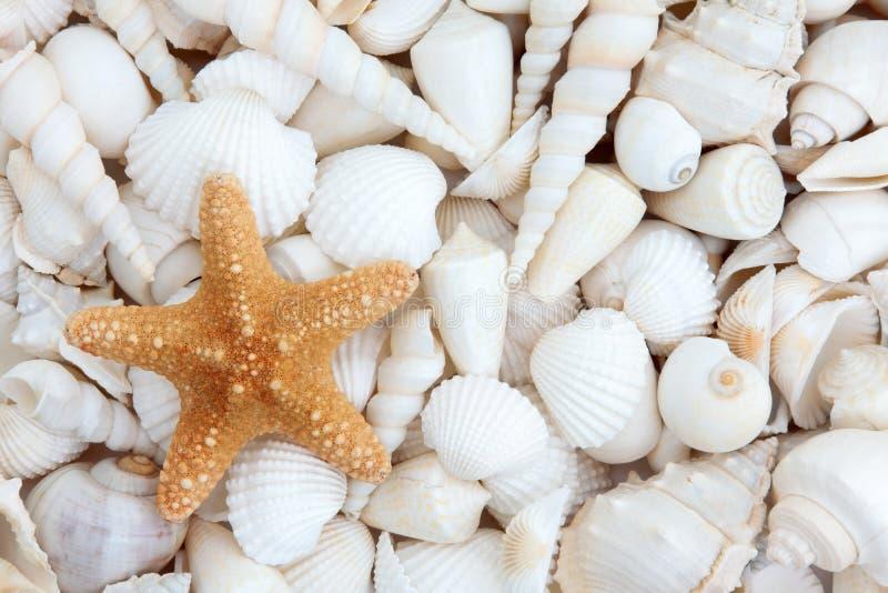 Overzees Shell Beauty royalty-vrije stock fotografie