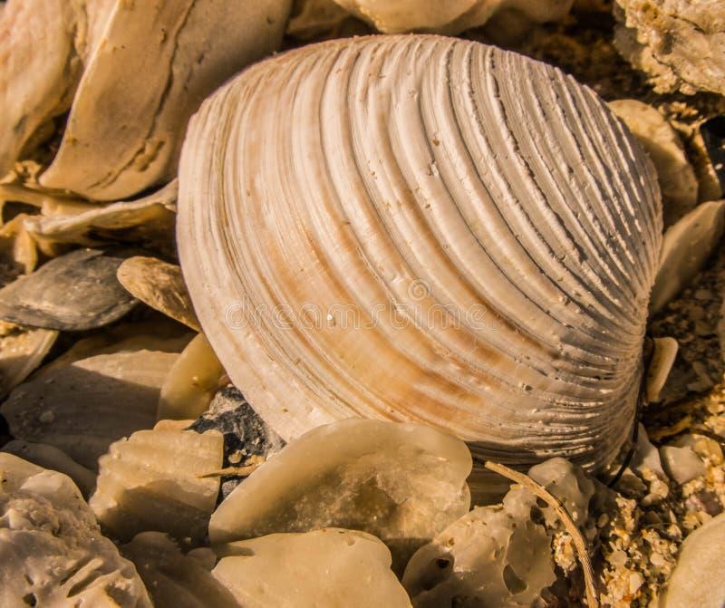 Overzees Shell op Strand royalty-vrije stock fotografie