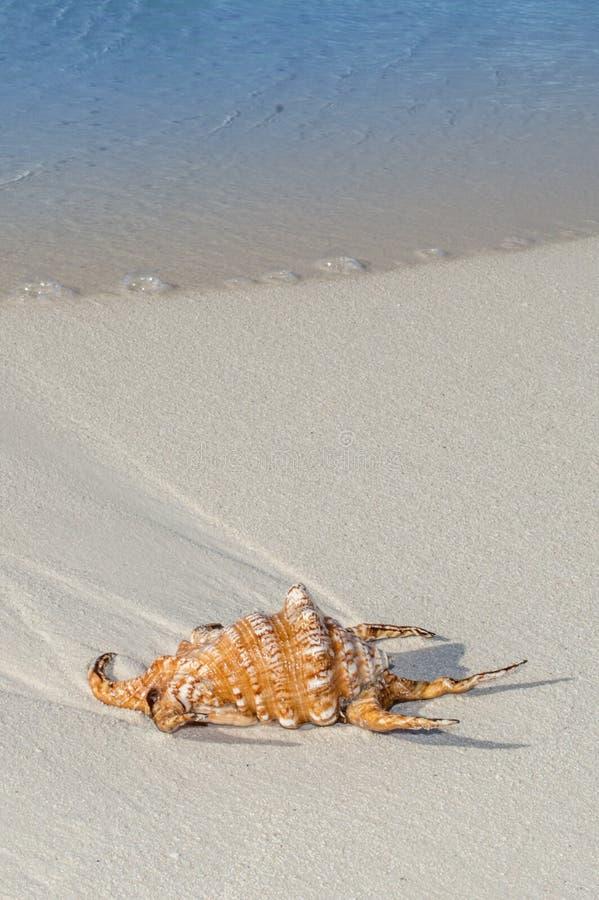 Overzees Shell op Strand stock fotografie
