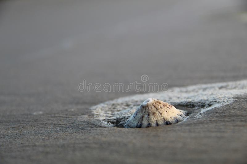 Overzees Shell op Strand stock foto