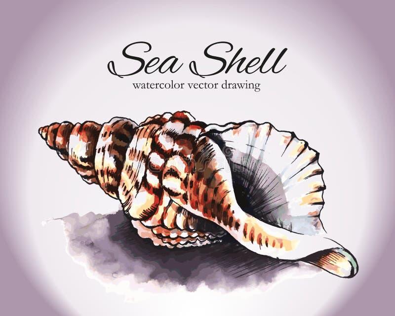 Overzees Shell Vector Watercolor Drawing royalty-vrije illustratie