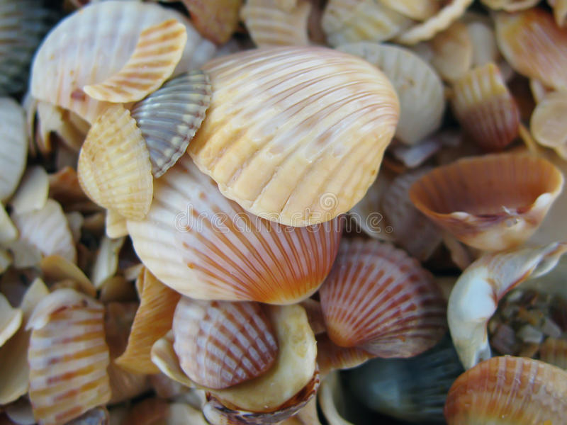 Overzees shells close-up stock foto's