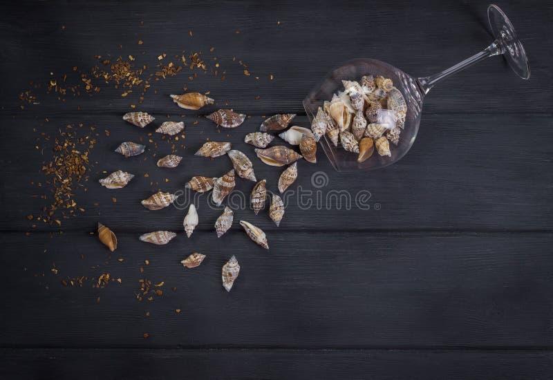 Overzees shells en wijnglas op de houten zwarte stock foto
