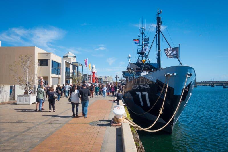 Overzees Steve Irwin Docked van de Herder bij Haven Adelaide stock afbeelding