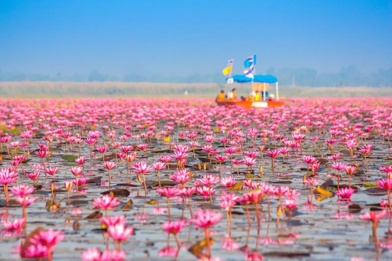 Overzees van roze lotusbloem, Nonghan, Thailand royalty-vrije stock foto's