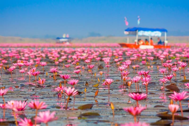 Overzees van roze lotusbloem, Nonghan, Udonthani, Thailand stock fotografie