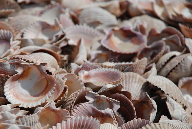 overzees van shells royalty-vrije stock foto